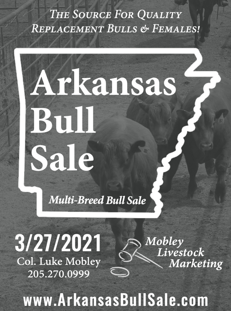 Arkansas Bull Sale 2021
