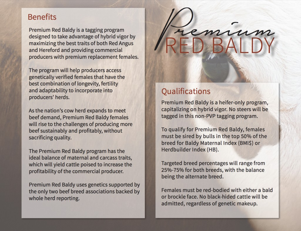 Premium Red Baldy Program Info.