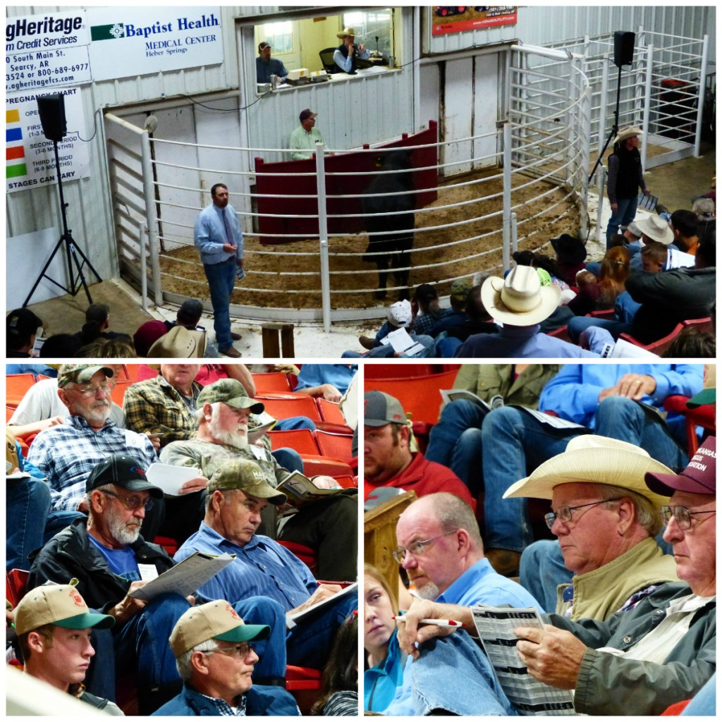Arkansas Bull Sale 2017 2