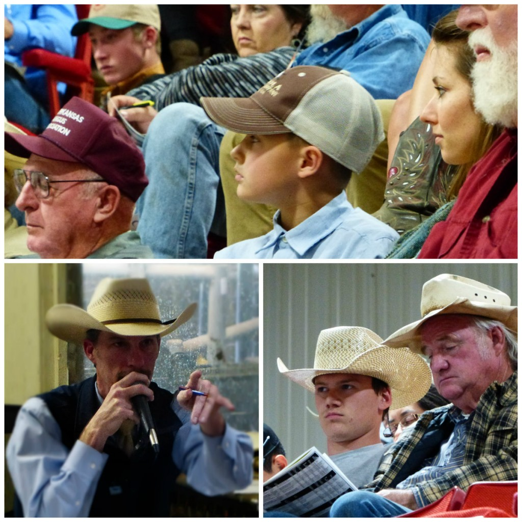 Arkansas Bull Sale 2017 3