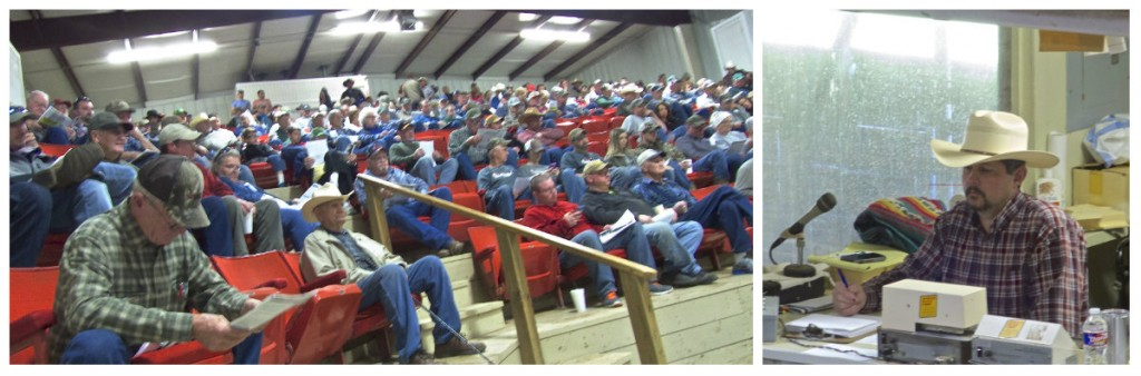 Arkansas bull sale 2016 5