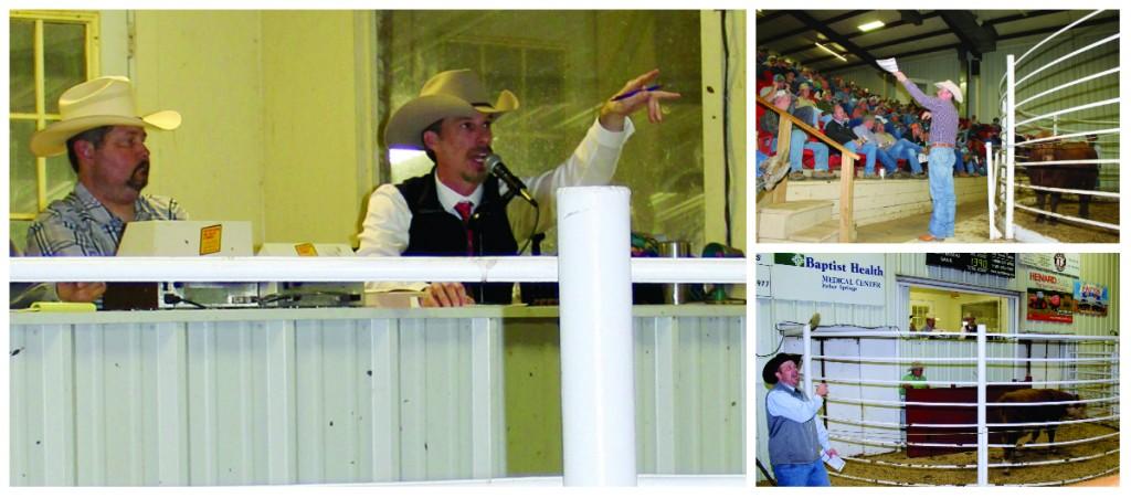 Auctioneer Luke Mobley Arkansas Bull Sale