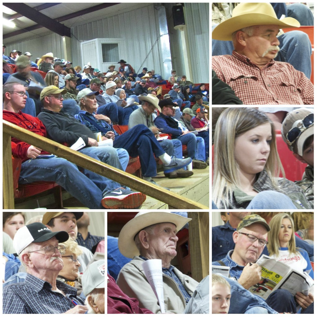 arkansas bull sale 2016 4